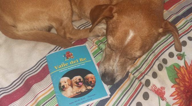 Viaggiare in Europa con il cane: il pet passaport