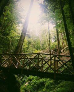 Sentiero nel bosco di Santa Maria - Silvana Lo Turco