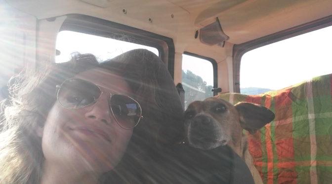 5 regole per viaggiare col cane