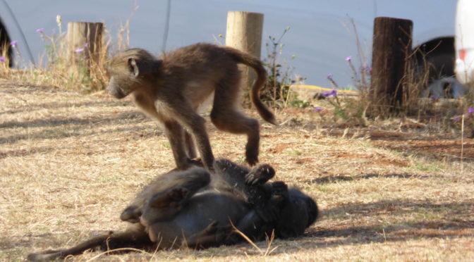 On the road lungo la Panorama Route in Sudafrica: le tappe imperdibili