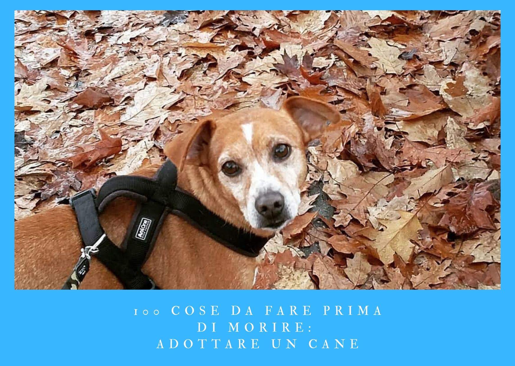 100 cose da fare prima di morire - adottare un cane