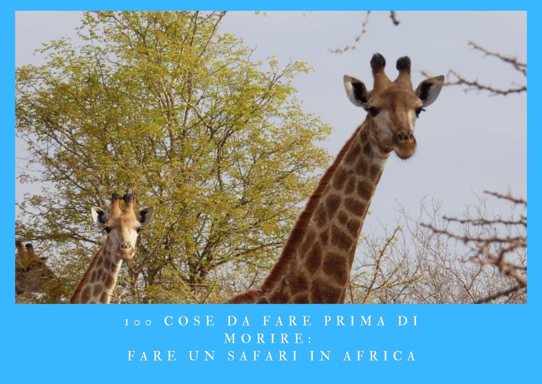 100 cose da fare prima di morire - fare un safari in Africa