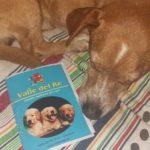 Viaggiare con il cane in europa: documenti e consigli di viaggio