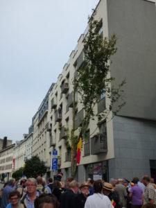 Meiboom - Bruxelles