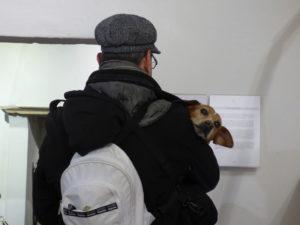 Urbino con il cane: Biagio alla casa di Raffaello