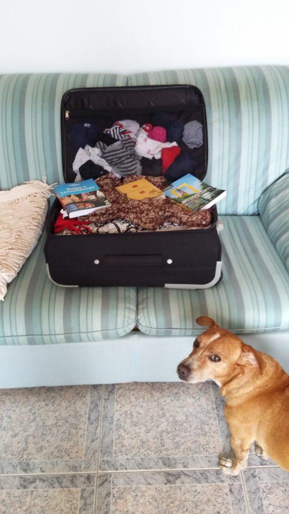 La valigia del cane