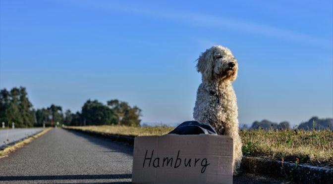 Le app migliori per viaggiare con il proprio cane.