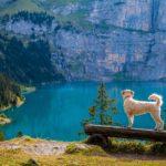 Escursioni con il cane: consigli per camminare insieme al nostro cane