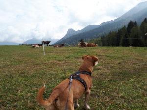 escursioni con il cane in montagna