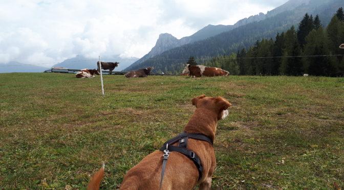 Gita fuori porta con il cane: dal mare alla montagna