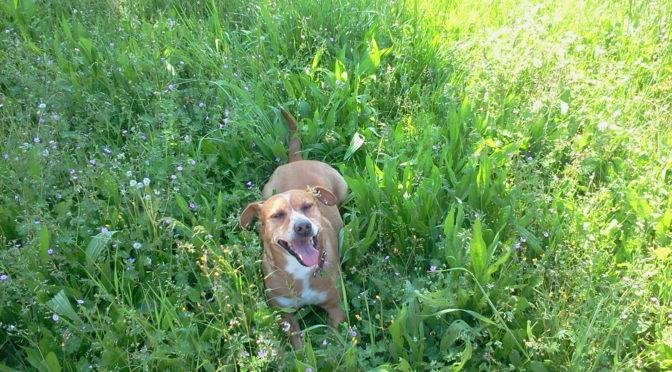 Colpo di calore nel cane: cosa fare e come prevenirlo