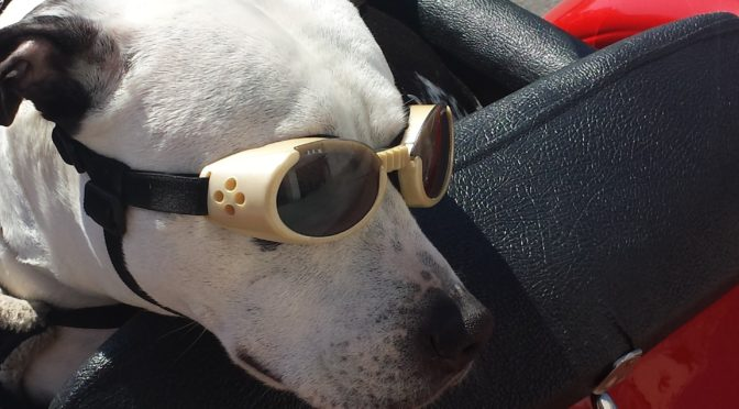 Viaggiare con il cane in aereo: io dico NO GRAZIE!