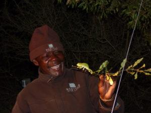 Un piccolo camaleonte nel buio del bush!