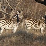 Safari in Sudafrica: Diario di viaggio