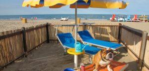 Spiagge per cani in Emilia Romagna - Bagno 81 Rimini