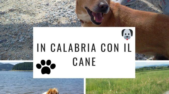 In Calabria con il cane: dalle spiagge dog-friendly ai percorsi in montagna