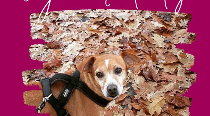 San Valentino con il cane: idee di viaggi e non solo