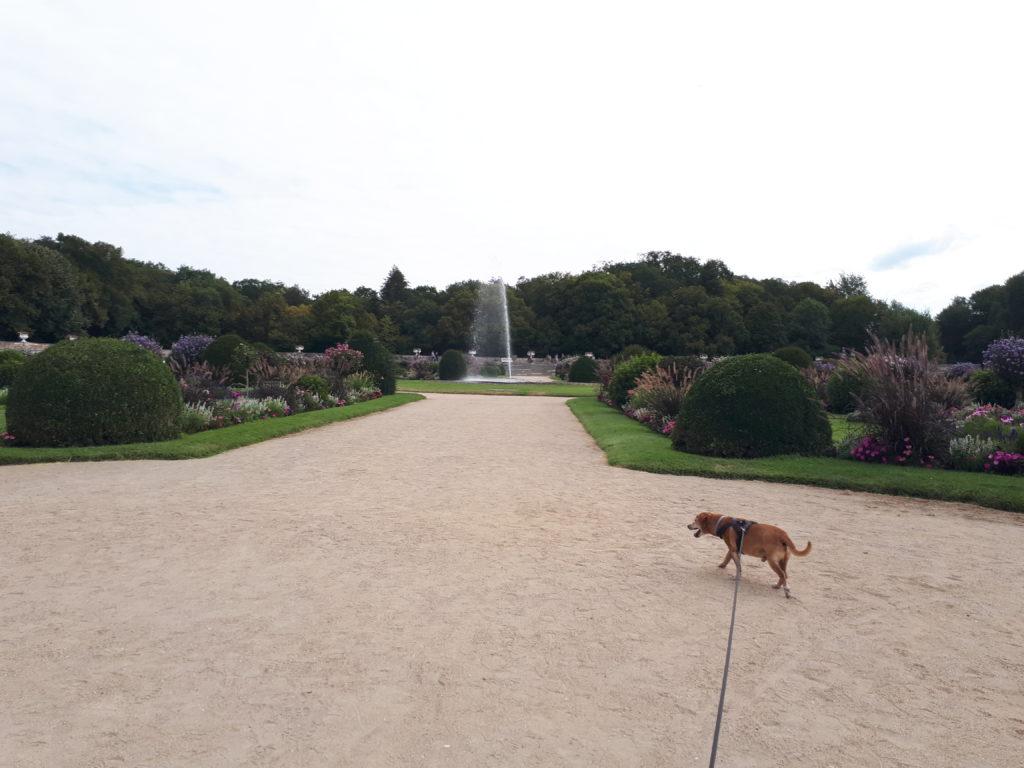 Giardini castello Chenonceau con cane