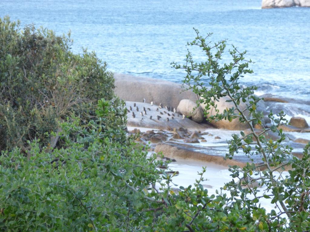 boulders beach sudafrica